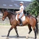 De nieuwe trend in paarden trainen