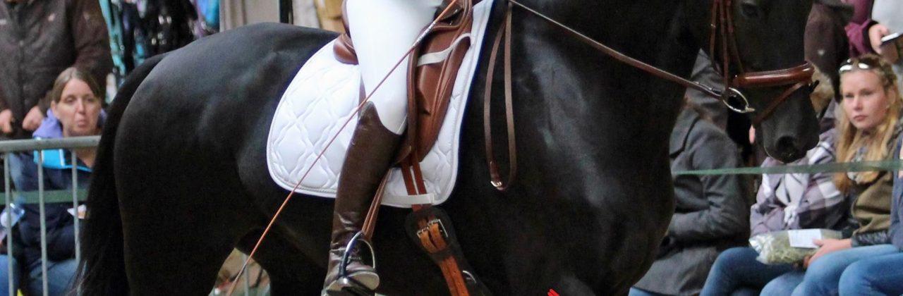 De voorwaarde voor een actief achterbeen: lengte in de hals!
