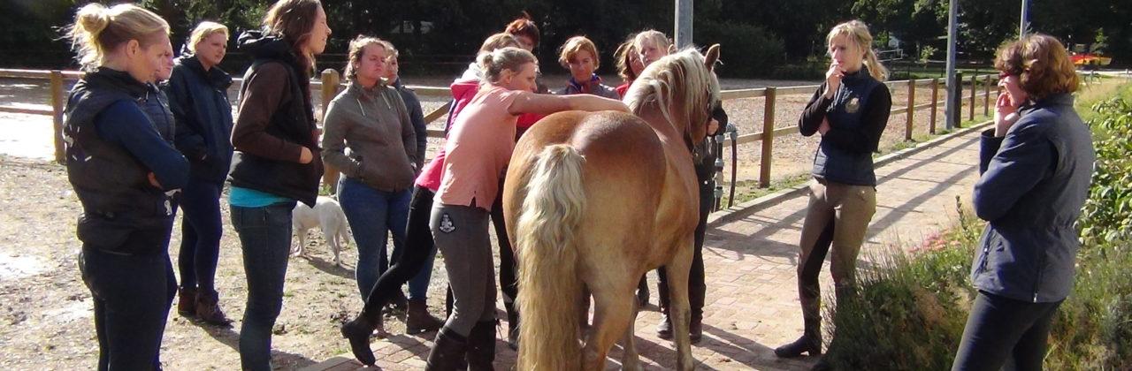 Het belang van multidisciplinaire paardenzorg